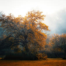"""A Kiss Of Autumn"""