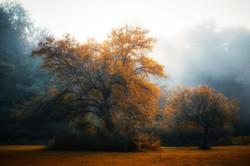 A Kiss Of Autumn