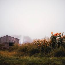 """""""September Sunflowers"""""""