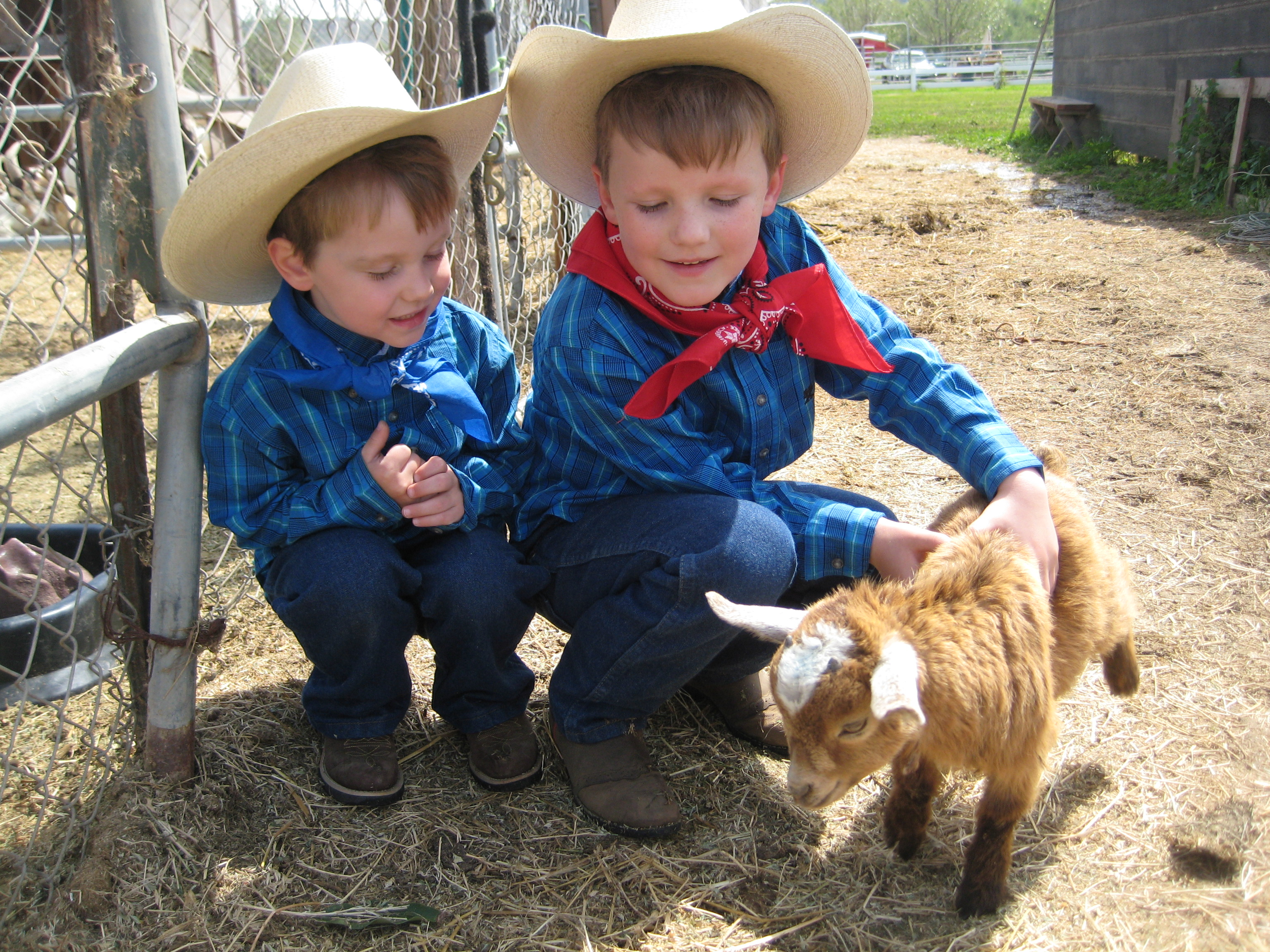 Petting Baby Goats