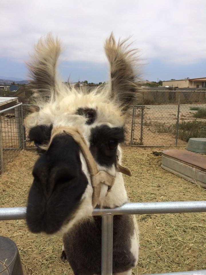 Hello, Llama