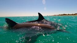 Dolphin_Skin