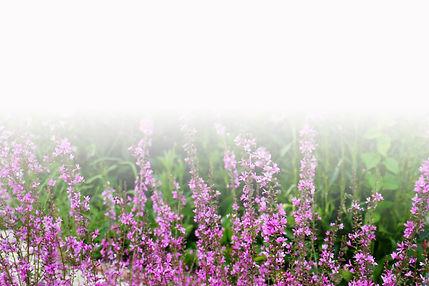 garden 4_gradient.jpg