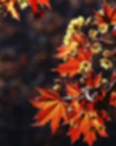 Haar en huid in oktober, De holistischeharenkalender