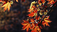Autumnal Equinox: When does fall officially begin