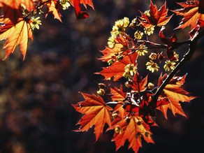 Breathe into Fall: The Season of the Lung