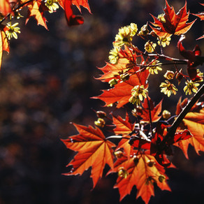 Symbolic Meanings of Fall/Autumn