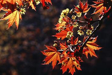 Herbstblätter