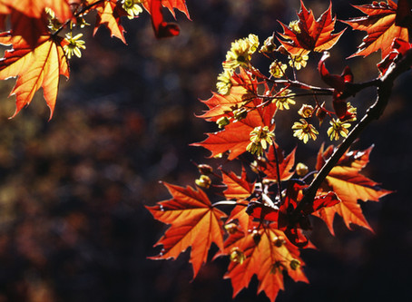 The 5 Elements: Living with the Fall Season