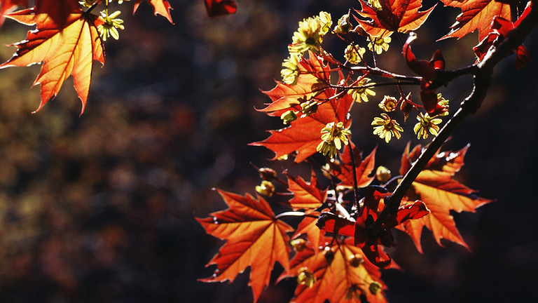Fall Concert of Praise