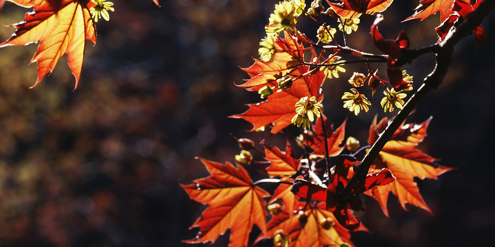 【24th November】Hiking for the view of Autumn Color at Akigawa Valley - 秋川渓谷ハイキング
