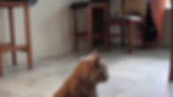 Screen Shot 2020-02-24 at 14.48.13.png