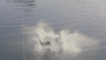 D.S. Splash.png