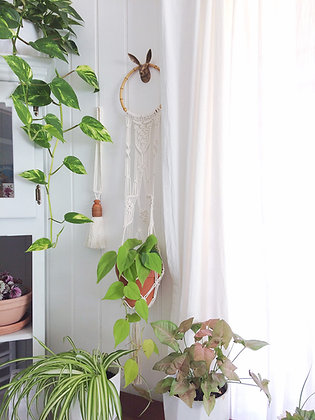 Medium Wall Hanging Planter