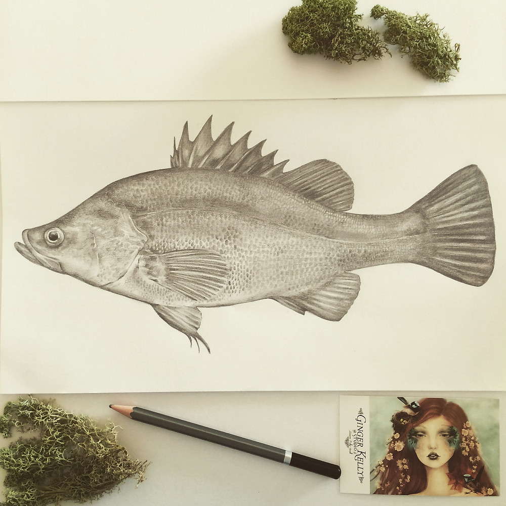 scientifically correct pencil illustration of a fish