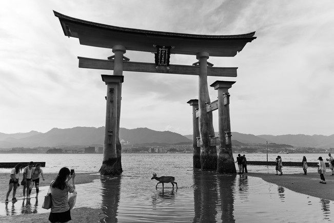 miyajima_deer_shrine_bw.jpg