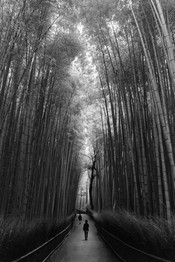 kyoto_bamboo_forest_bw.jpg