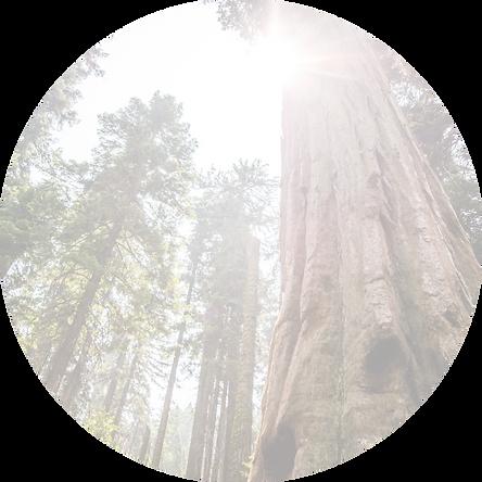 sunlit%2520forest%2520circle_edited_edit
