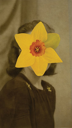 lady narcissus