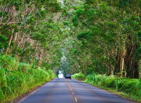 Road Tripping in Kauai