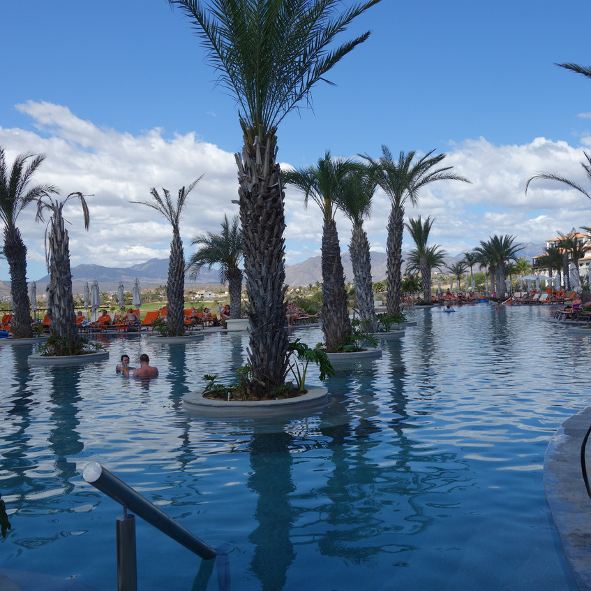 Beautiful palm trees scattered throughout the pool.