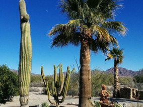 I loved the different scenery in Arizona. This was my mom's neighbor's yard.