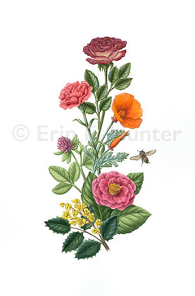 Botanical Drawing & Nature Journaling
