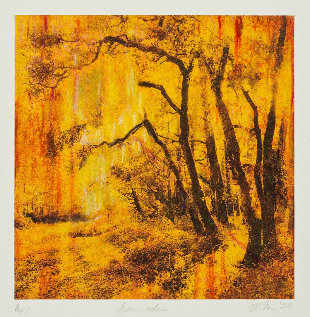 From Eden 1.jpg