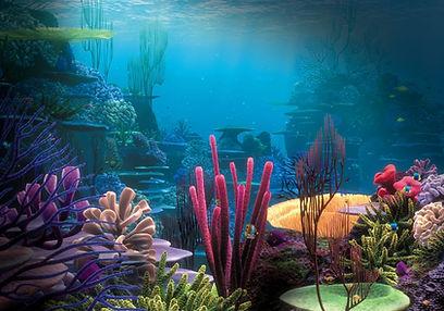 under the sea pic.jpg
