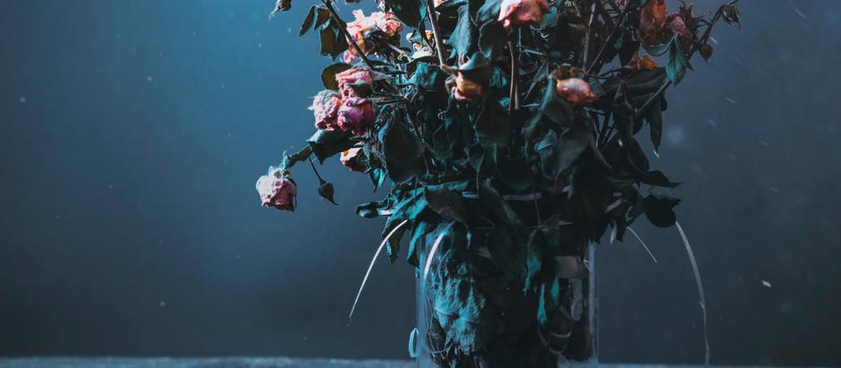 Dead plants.