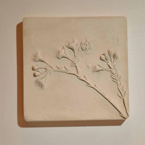 Waxflower (TM141)