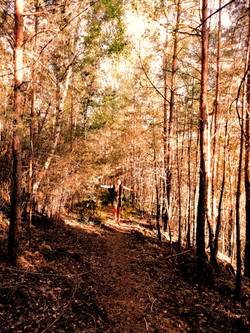 Wald-Raum.jpg