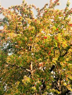Baum-Raum.jpg