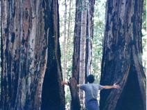 Action Alert: Stop Destructive Logging in Mendocino!