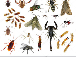 Alanya Böcek İlaçlama 0242 522 60 06