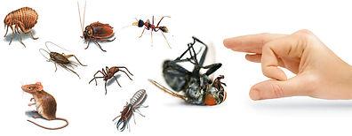 Alanya böcek ilaçlama, alanya ev ilaçlama, alanya pest ilaçlama, manavgat ev iaçlama