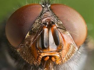 Sivrisinek, Karasinek, Tahtakurusu, Bit, Pire, Hamamböceği ve Karıncanın Sırları