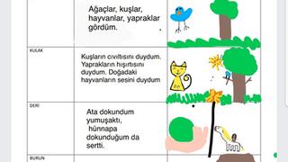 3.Sınıf Fen Bilimleri Karma Öğrenme Farklılaştırılmış Ders Tasarımı Örneği