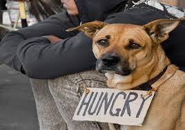 hungry dog with owner