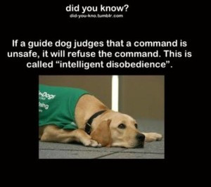 10348630_1116087085076628_9037135695002270068_n guide dog intelligence