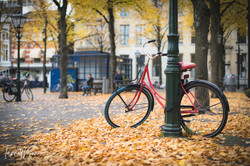Dutch Bicycles