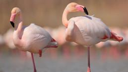 Flamingo Will Make Ethereum-NEO Multi-Chain Yield Farming Possible