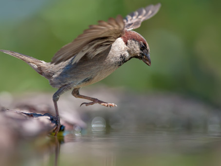 Sparrow's Flight! #sparrowsflight