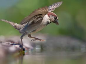 Sparrow's Flight: Words on a Page #sparrowsflight