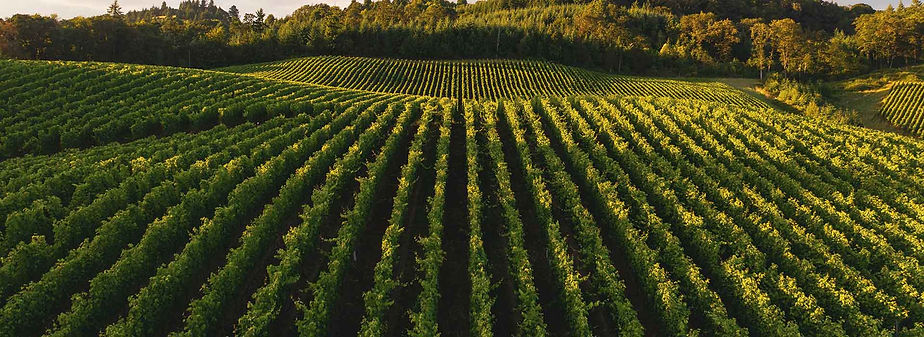 Our-favourite-historical-Constantia-wine