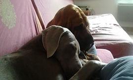 éducation chien- comportementaliste