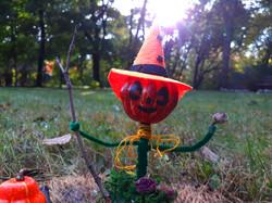 Pumpkin Witch Rose