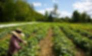 Farm with farmer.jpg
