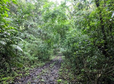 Successful Deep Jungle Canopy Demonstration