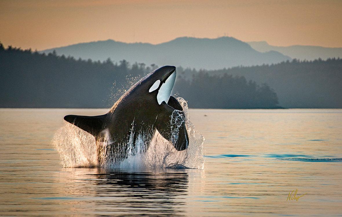 Marine Mammal Tour